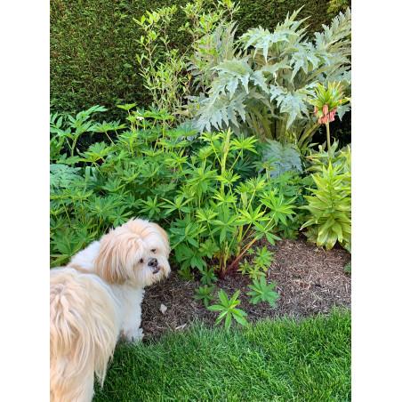 Mulching with Strulch in a family garden