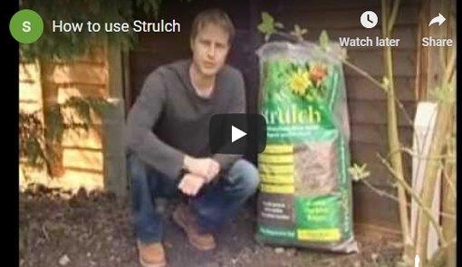 Strulch Videos